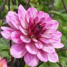 Lauren Michelle Flowers, Plants, Roses, Flower, Plant, Royal Icing Flowers, Florals, Floral, Planets