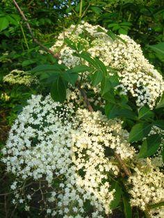 The Independent Herbalist
