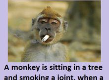 A MONKEY IS SITTING IN A TREE AND SMOKING A JOINT - #funny #funnypictures , Funny Jokes, Funny Stories, #humor  #monkey