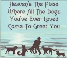 It's called the Rainbow Bridge! They wait at the Rainbow Bridge and accompany us across into heaven! All Dogs, I Love Dogs, Puppy Love, Dogs And Puppies, Yorkies, Pomeranians, Chihuahuas, Mans Best Friend, Best Friends