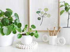 plantes_vertes_interieur_faciles_entretien_astuces_blog_decouvrir_design_1
