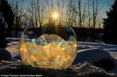 Nature's colours: Golden sunlight makes this frozen soap bubble look like a priceless arte...