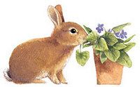 Violets for the bunny