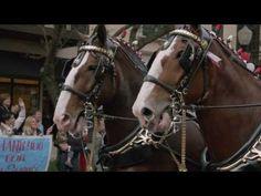 "Budweiser Super Bowl XLVIII Commercial -- ""A Hero's Welcome"" -- Teaser (..."