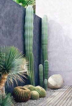 outdoor garden landscape design cactus and yucca plants urban mexican desert style Small Backyard Landscaping, Landscaping Plants, Landscaping Ideas, Patio Ideas, Backyard Ideas, Landscaping Edging, Fence Plants, Backyard Patio, Golden Barrel Cactus
