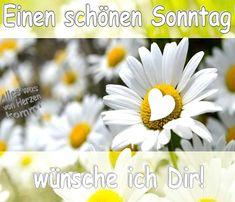 I wish you a beautiful Sunday!