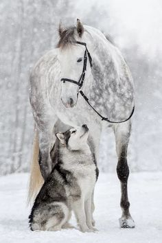 Awww unusual, yet beautiful friendships