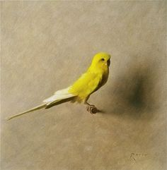Carlo Russo, 'Gold Parakeet', 10 x 10, Oil on Linen