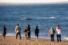 Peninsula Valdes, Costa, Areas Protegidas, Ecuador, Penguins, Fauna, Animals, Videos, Elephant Seal