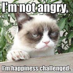 grumpy cat - Buscar con Google