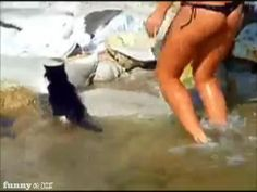 Cat Goes for a Swim