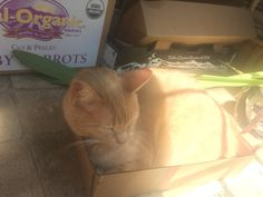 mid day sun bathing in a box. if it fits i sits!