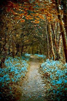 Road less traveled: Currabinny Woods, Cork, Ireland. #IrelandLandscape