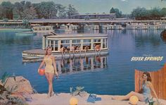 """Activities at Silver Springs, including tourists feeding fish from the """"Arlene Francis"""" glass bottom boat (1950s). 