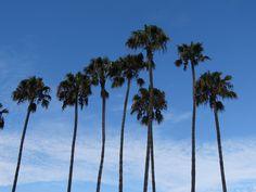 Drive California blog