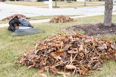 The days are shorter and to-do lists are longer, but we've got a few ideas for speeding up fall clean ups for you on our blog. How do you like to make quick work of leaves? Fall Clean Up, Leaves, Cleaning, Texture, Tools, Landscape, How To Make, Blog, Crafts