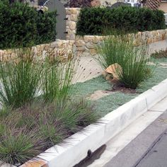 great groundcovers and grasses make this sidewalk strip low-water and beautiful