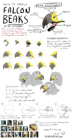 Tutorial: How To Draw Falcon Beaks by BriMercedes on DeviantArt – Skintal Creature Drawings, Bird Drawings, Animal Drawings, Animal Sketches, Art Sketches, Art Reference Poses, Drawing Reference, Drawing Expressions, Furry Drawing