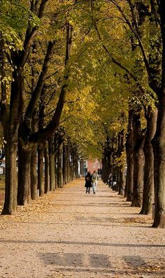 Autumn walk.. in Hofgarten park, Bonn, North Rhine-Westphalia, Germany