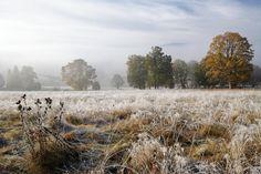 Šumava - podzim na Kepelském Zhůří European Countries, Future Travel, Czech Republic, Waterfalls, Woods, Outdoor, Plants, Nature, Outdoors