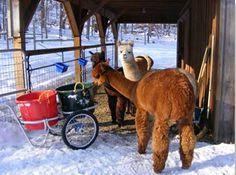 Show Horse Gallery - Muller's Smart Cart