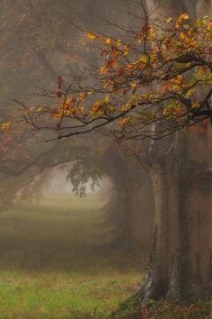 """I feel the silence, the mist and old Autumn"""