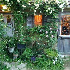 左アーチのクレマチス白万重、下の薔薇淡雪、もう少し・・・待ってるよ  *  *  *  #ナチュラルガーデン#ローズガーデン#ジャンクガーデン#フレンチガーデン#マイガーデン#ガーデン#ガーデニング#ガーデンシェッド#薔薇のある暮らし#植物のある暮らし#庭のある暮らし#庭#園芸#mygarden