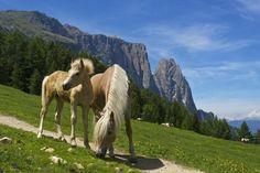 Tierischer Urlaub: Reiten, gut essen und nicht zu weit weg? Südtirol! - WELT HD