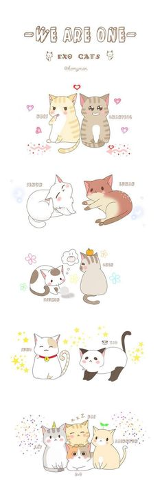 exo cats