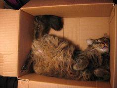 7. Avachi contre le mur ou dans un carton (Les chats dorment n