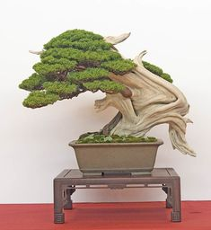 Bonsai Autumn 2011 - Walter Pall