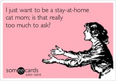 I just want to be a stay-at-home cat mom; is that really too much to ask?