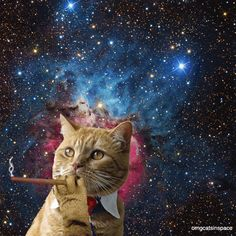 cat animals space animal smoking cats in space cat in space