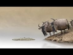 Wildebeest : 2012 - Directed by Bird Box Studio. Funny short about two Wildebeests trying to determine if that thing in the water is a log or a crocodile. Discovery Channel, Mundo Gif, Box Studio, Movie Talk, Bird Boxes, Film D'animation, Animation Film, Conte, Animated Gif