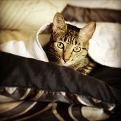 Gatita en las sábanas.