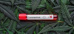 Israël: ontstekingsremmers op basis van cannabis tegen luchtwegaandoeningen - Mediwietsite Cannabis Oil, Lipstick, Beauty, Crowns, Seeds, Beleza, Lipsticks, Cosmetology