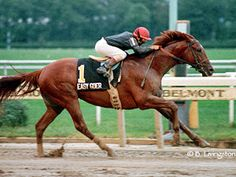 """Easy Goer was a Thoroughbred racehorse who was inducted in the American Champion Hall of Fame(for racehorses) in 1988.  One of his most remarkable feats was in 1989 when he deafted the American Horse of the Year """"Sunday Silence"""" in the Belmont Stakes by 8 lengths.   Check out some other great horses:  http://central.parellinaturalhorsetraining.com/2013/08/the-wonder-of-the-horse-seven-great-horses-from-throughout-history-2/"""