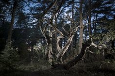 photography-blog Man Made Environment, Night In The Wood, City Lights, Nature, Artist, Plants, Photography, Led, Image