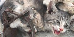 Iscriviti per dirlo ad Amazon: non più crudeli trappole per animali in acciaio-mascella