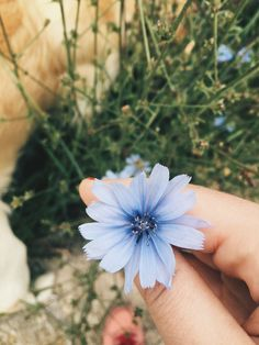 A little blue for you, but I'm the rainbow that shines after your rain. - Aileen d'OcQueen Flower Aesthetic, Blue Aesthetic, My Flower, Pretty Flowers, Fred Instagram, Cool Pictures, Beautiful Pictures, Foto Art, Flower Wallpaper
