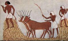 Threshing of Grain in Egypt