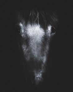 One of the spookiest Icelandic ghost stories, Djákninn á Myrká, happens at Christmas and features a deacon and his horse Faxi.