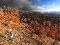 Bryce Canyon Fall Tree by Eamon Gallagher on 500px