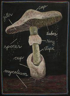 Age 11 ~ Botany ~ Mushroom Anatomy