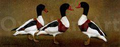 Rooster, Prints, Printed, Printmaking, Kai
