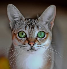 Kitty Royalty by PWK4, via Flickr