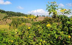 Fotoblog Myanmar: Unterwegs im Land der Pagoden © Jürgen Garneyr Vineyard, Outdoor, Pictures, Landscapes, Culture, Viajes, Outdoors, Vine Yard, Vineyard Vines