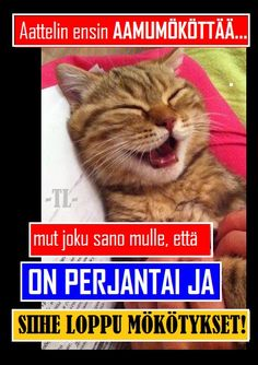 How I Feel, Funny Texts, Live Life, Cats And Kittens, Funny Pictures, Feelings, Memes, Poster, Animals