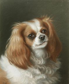 Little Dogs, Big Dogs, Dogs And Puppies, King Charles Spaniel, Cavalier King Charles, Spaniel Dog, Spaniels, Dog Portraits, Dog Art