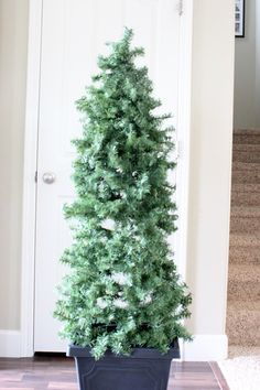 Quick and Easy Evergreen Topiaries